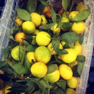 Первые мандарины